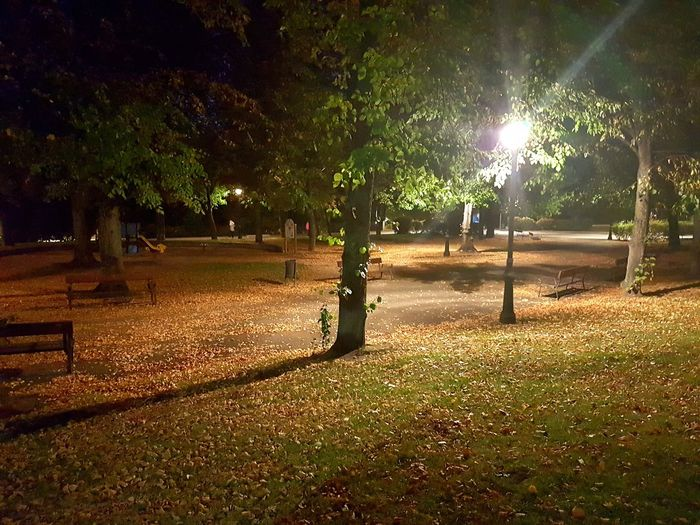 Night Illuminated Beauty In Nature No People Tree Autumn Relaxing Moments Lonely Moment