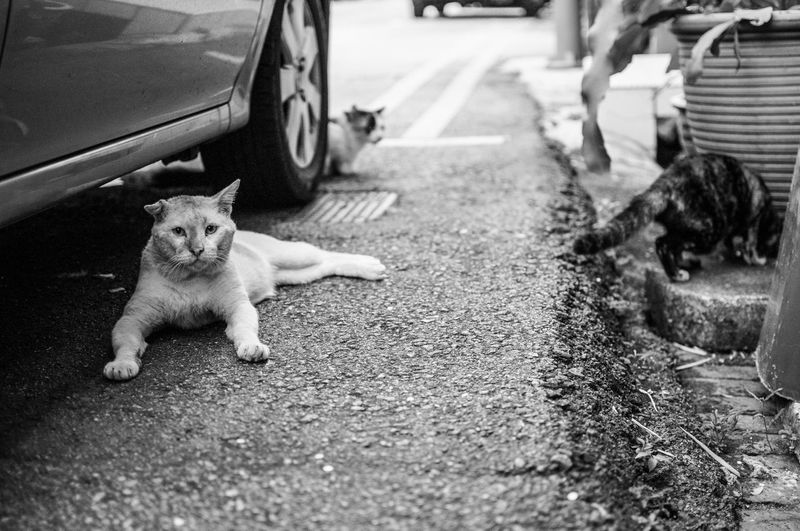 Black Cat Domestic Animals Mammal Pets Portrait Selective Focus Transportation