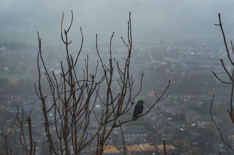 View of birds perching on bare tree