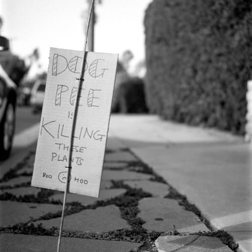 Signs Focus On Foreground Close-up Text No People Outdoors Day Sidewalk Dogs Warning Venice Beach Sign Medium Format Film Rolleiflex Kodak