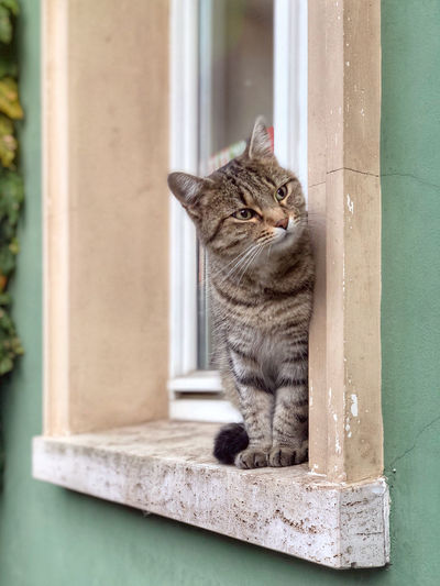 Lovely Cat waiting for something in a window. Domestic Cat Feline Pets Domestic Cat Domestic Animals One Animal No People Window Sitting Day Relaxation Looking