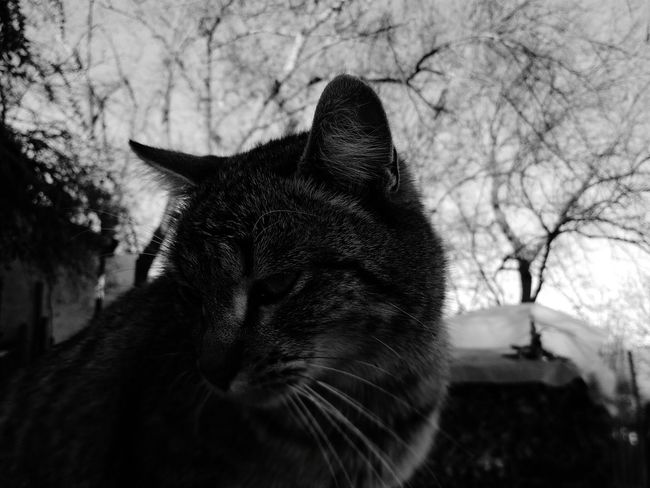 Domestic Cat Pets Mammal Domestic Animals One Animal Tree No People Feline Animal Themes Close-up Nature Sky Day Outdoors Milù Is Mu Favourite Cat
