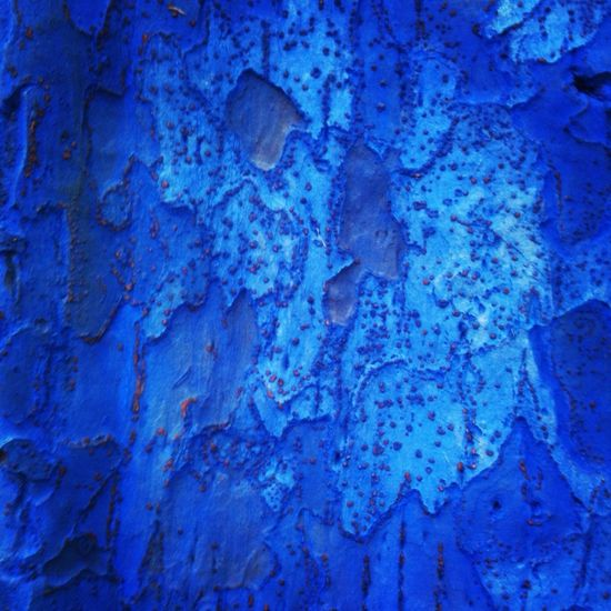 Abstract The Minimals (less Edit Juxt Photography) Abstractions In Colors Bluetrees Blue Bark Bark Texture Bark Texture Background Tree Mottled Patchy Sycamore