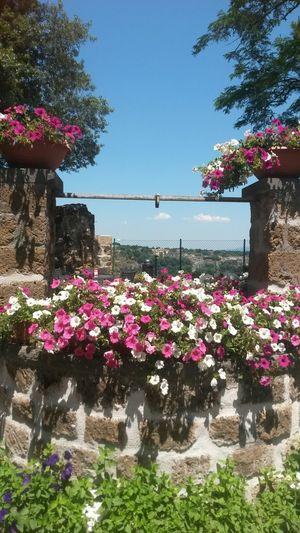 Civita Di Bagnoregio Civitadibagnoregio Italia Beauty Around Us I ♥ Flowers I ♡ Flowers