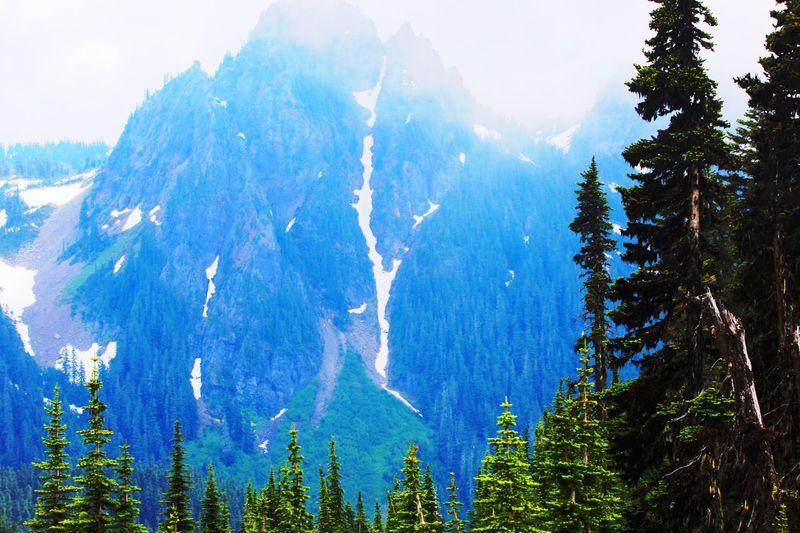 Mount Rainier Outdoors Tree Nature No People Full Frame Scenics