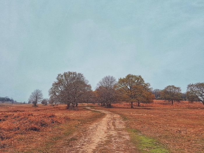 Field against sky