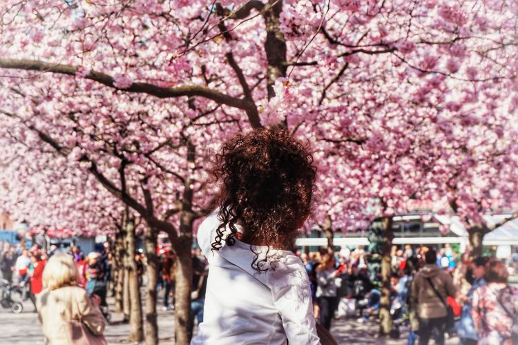 Rear view of girl looking at cherry blossom tree