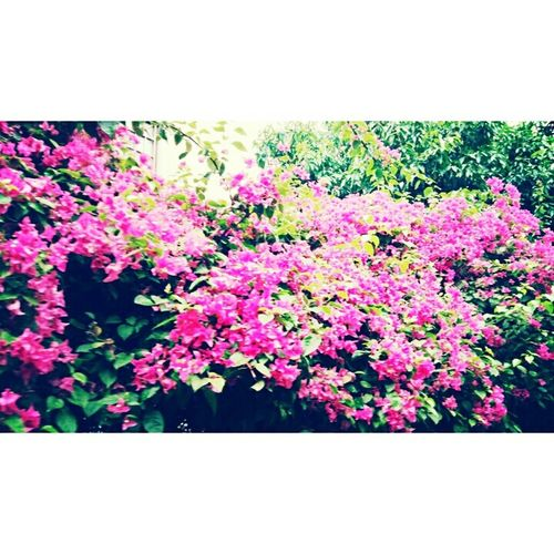 Happyflowers Check This Out Atmycampus Mycampus Beautiful Nature Taking Photos