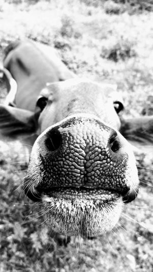 One Animal Animal Themes Close-up Outdoors First Eyeem Photo