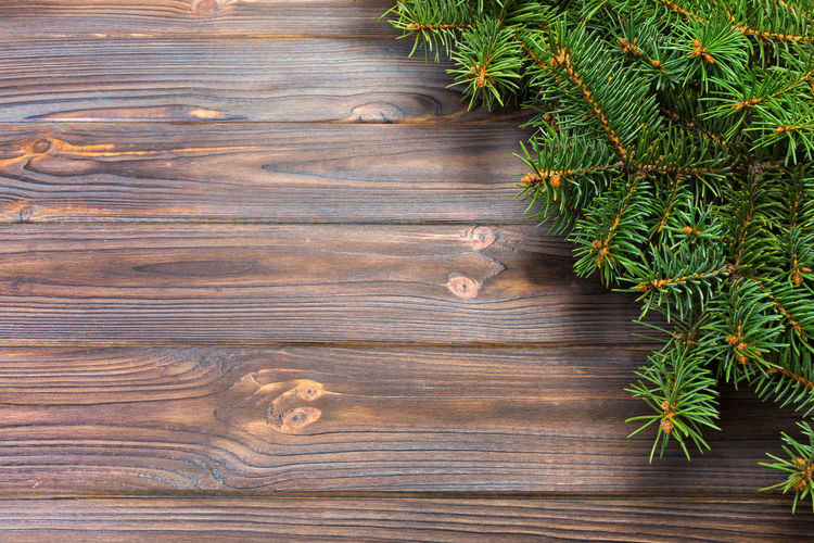 Close-up of pine tree on wooden plank