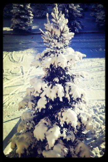 ❄️snow⛄️ Hello World Snow