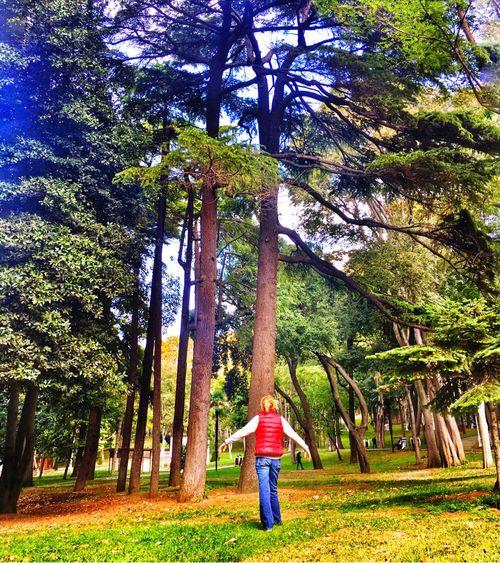 Gulhaneparki Beyazıt Istanbul Oldtown Tree Trunk Park - Man Made Space Green Color Nature WoodLand Tree Person OpenEdit