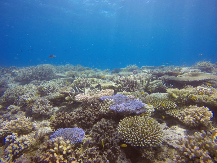 Healthy corals below the surface of Moalboal Diving Adventure Beauty In Nature Coral Ecosystem  Reef Sea Life Underwater My Best Travel Photo