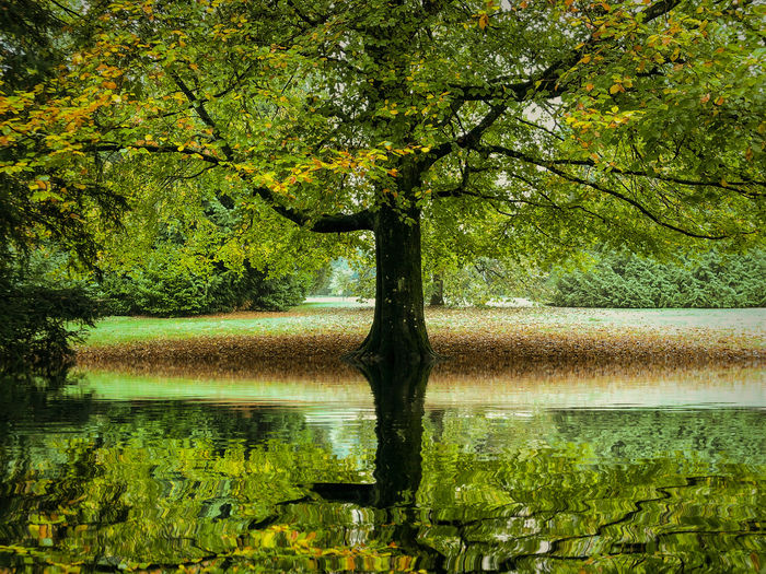 Autumn reflections Tree Plant Water Lake Reflection Tranquility Beauty In Nature Nature Tranquil Scene Scenics - Nature Growth Trunk Tree Trunk Day Forest Green Color No People Non-urban Scene Land Outdoors