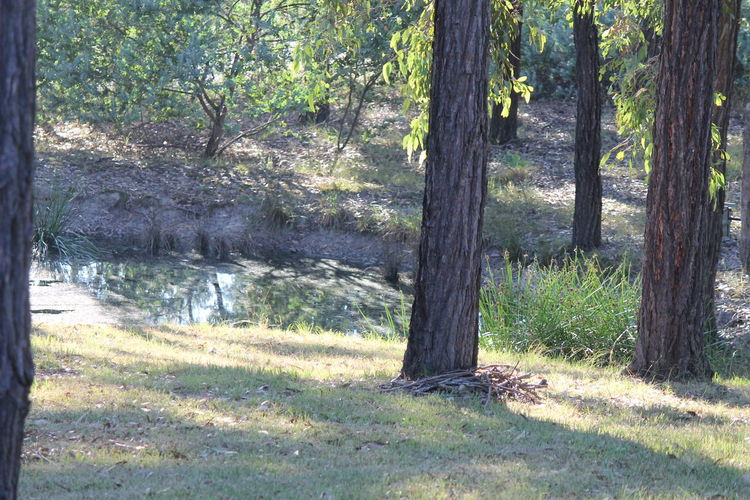 At Farm Beauty In Nature Gras Brown Growth Lots Of Trees Love The Fresh Air Low Water Dam Need Badly Rain