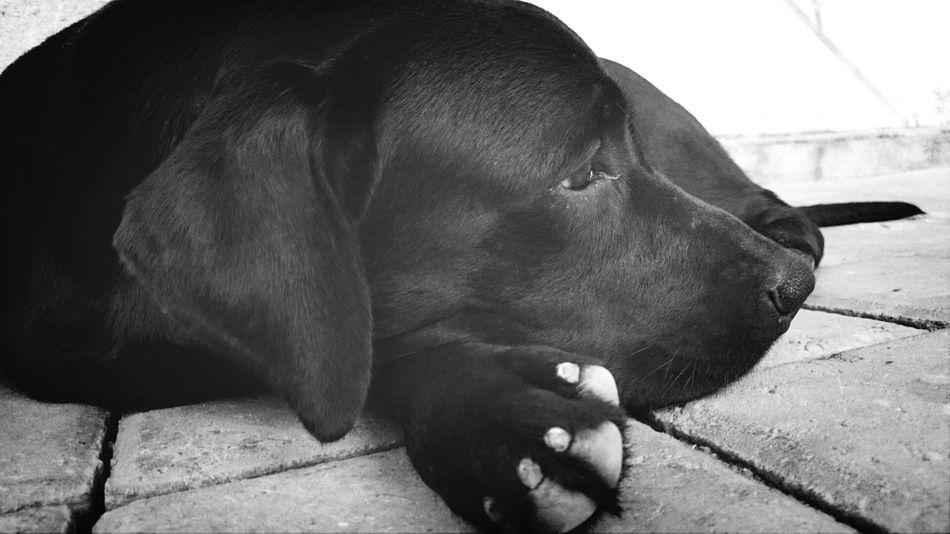 Beloved Kaela Ilovemydog Blackandwhite Bali Puppy