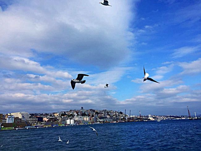 Özgürlük kusların kanatlarında 🕊 Flying Bird Mid-air Animal Themes Animals In The Wild Sky Animal Wildlife Cloud - Sky Sea Nature Photography Istanbul EyeEm Gallery Eye4photography  Photooftheday Kadrajımdanyansıyanlar Fujifilm Tutiim