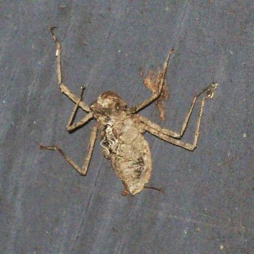 Unknown Insect Whatisthis Dead Insect