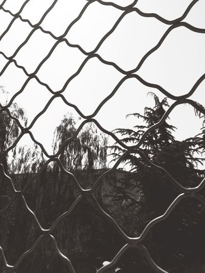 我住在一个叫做寂寞的笼子里