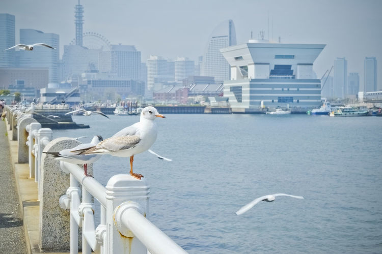 Architecture Bird Built Structure City City Life Cityscape Day Harbor Harbour Japan Nature No People Outdoors Perching Sea Sea Bird Seagull Seagulls Sky Spread Wings Travel Destinations Yokohama Ultimate Japan