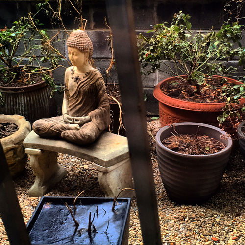 Garden Buddha Buddha Statue Creativity Day Flower Pot Front Or Back Yard Garden Green Color Growth Ivy Leaf Plant Potted Plant Relaxing Wall