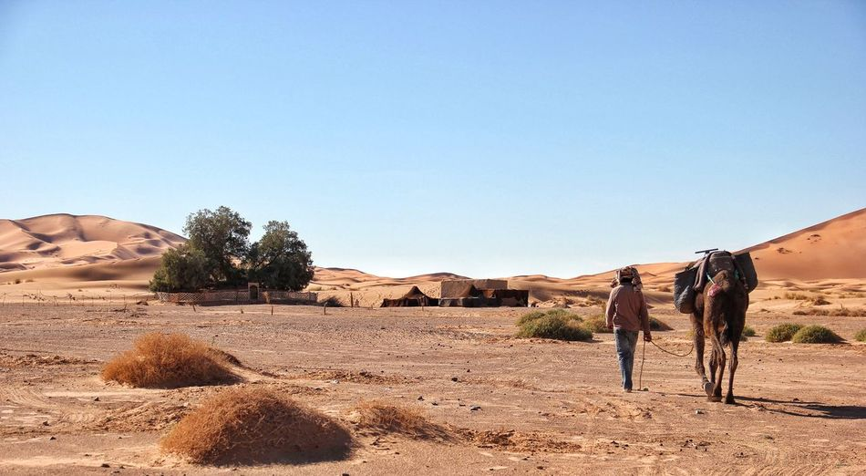 Rear View Of Man With Camel Walking In Erg Chebbi Desert Against Clear Sky