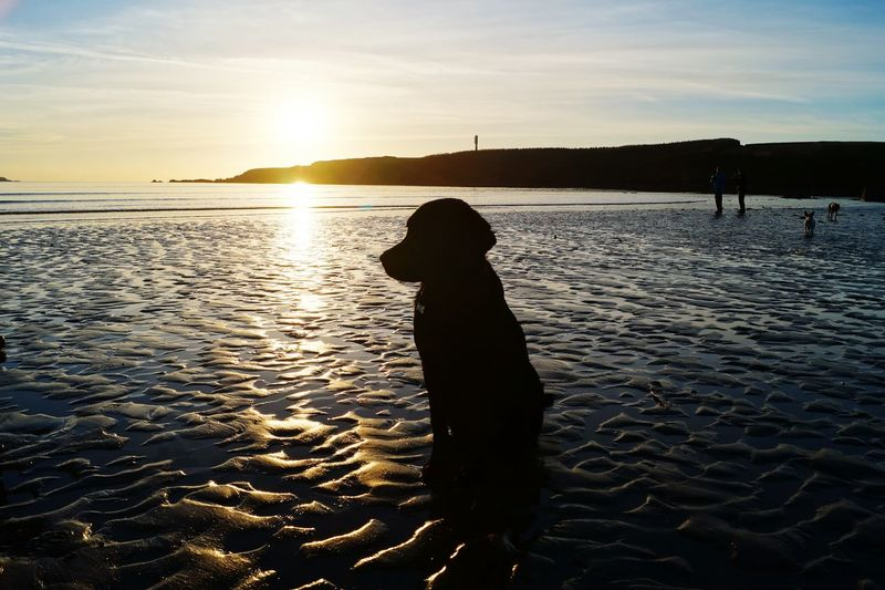 Everyday Joy Black Lab Labrador Puppy Walkies Beach Sunset Sun, Sea & Sand Pembrokeshire Creative Light And Shadow