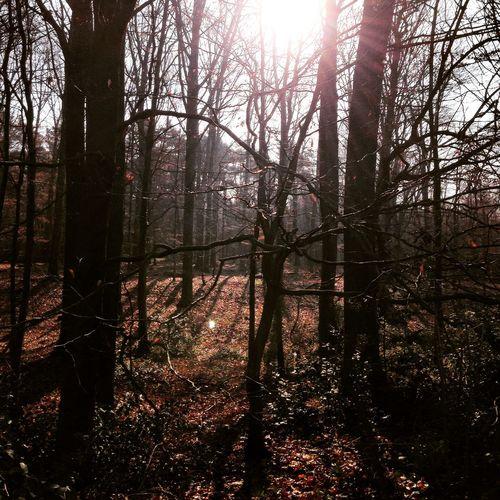 Wald Sonne Bäume Frühling Angenehm Warm In Der Sonne