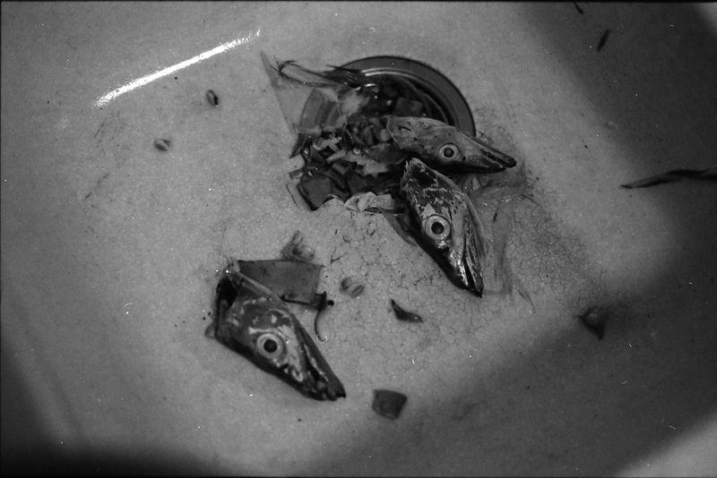 Film B&w Death Food Fishhead Fish Veganism Animal Rights