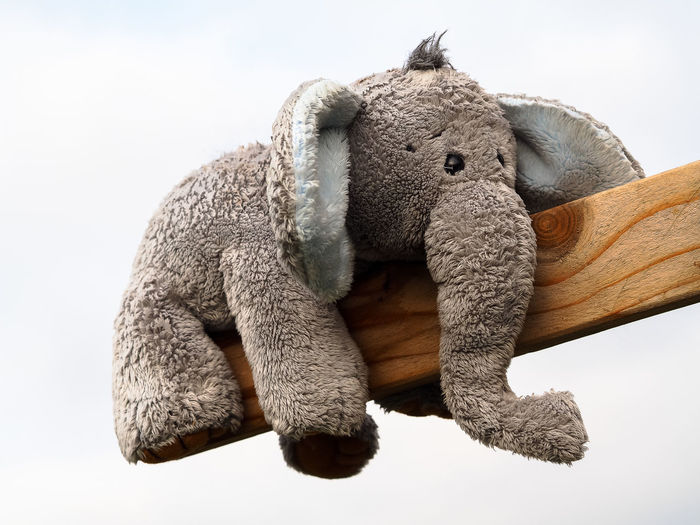 Close-up of elephant shape stuffed toy on wooden plank against clear sky