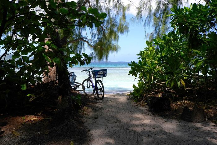 Beauty In Nature Growth Let's Go. Together. Nature No People Ocean View Outdoors Rest In Peace Ride A Bike  Riding Bike Travelling Photography Tree Done That.