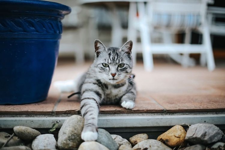 Portrait Of Cat Sitting On Walkway By Stones