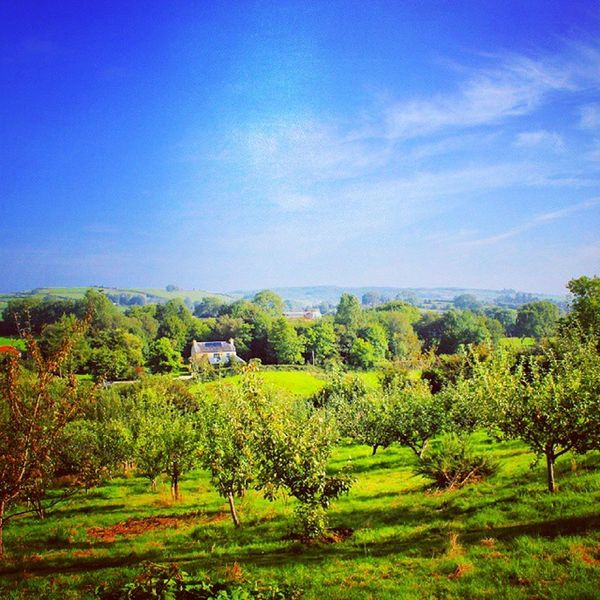My hearts desire is for a place like this to be my everyday Movingoutwest Irishcountryside Irishseedsavers Instaireland Naturallife Nature Tranquility Peaceful Dreambig Clare WestOfIreland Outdoors Recharge Countrywalks Ireland Orchard Blueskies Perfectday