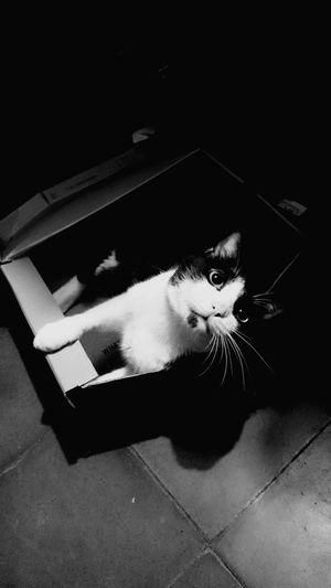 Cat Cat House Cat Dream Cat Paradise Kitty Cat In The Box Box Box House