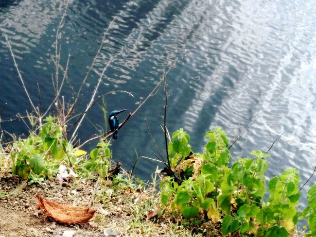 The Bird Shot Water Lake Lakeshore Nature Tranquility Plant Outdoors Day No People Non-urban Scene Lakeside Tranquil Scene Scenics Beauty In Nature Green Color