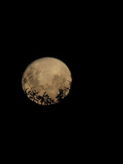 Súper mono Moon
