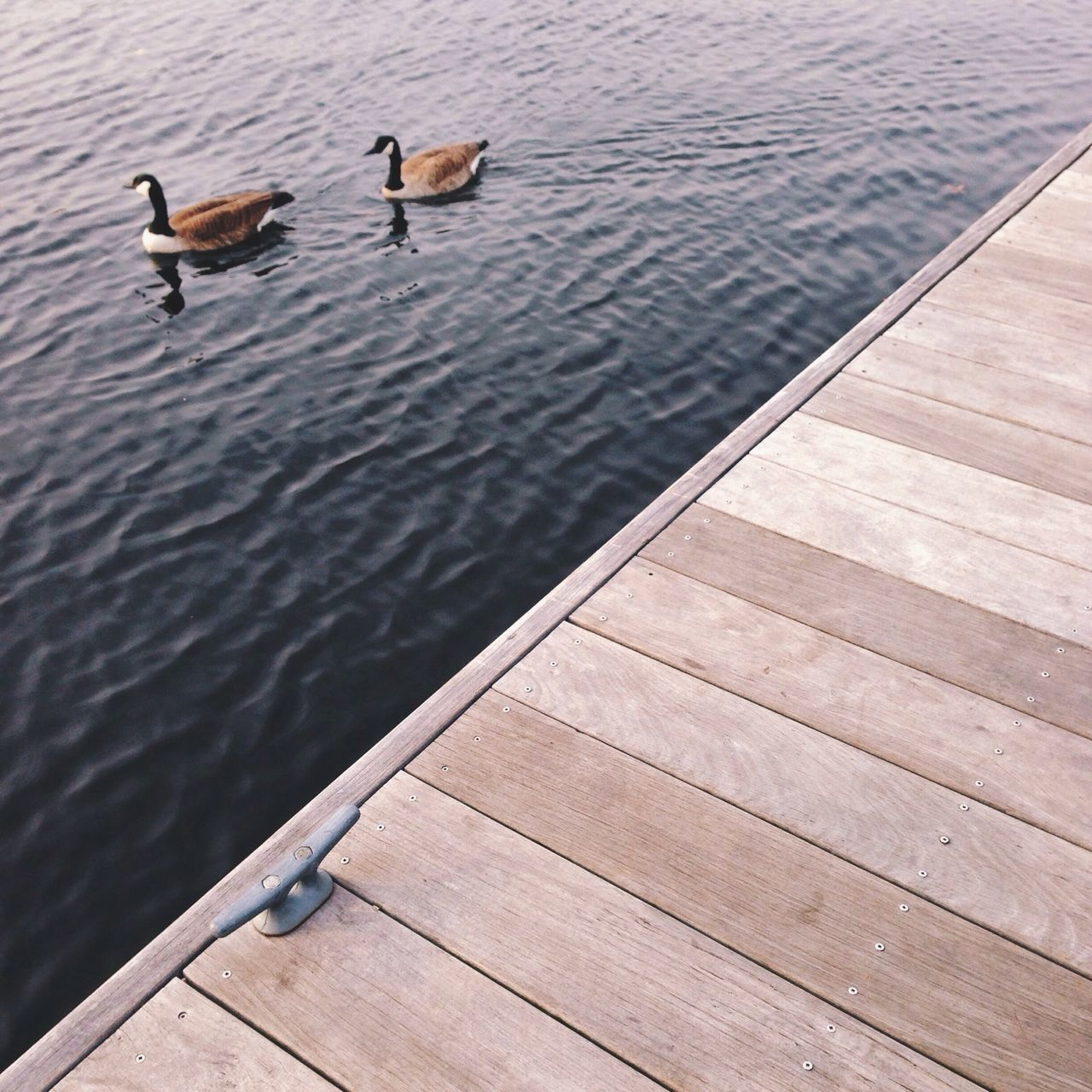 Geese swimming in lake by pier