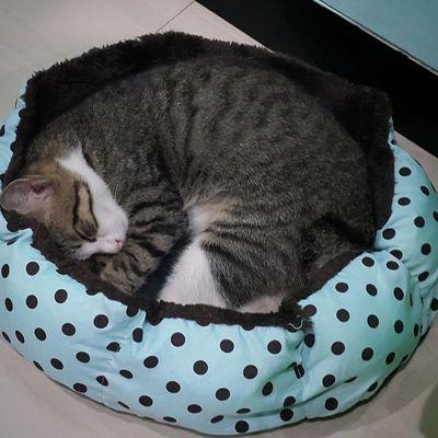 Pet Portraits Domestic Cat Pets Feline Sleepy Kitty Sleeping Cat Adorable Kitten<3 Cute Kitten Cats Cute Cat Kitten