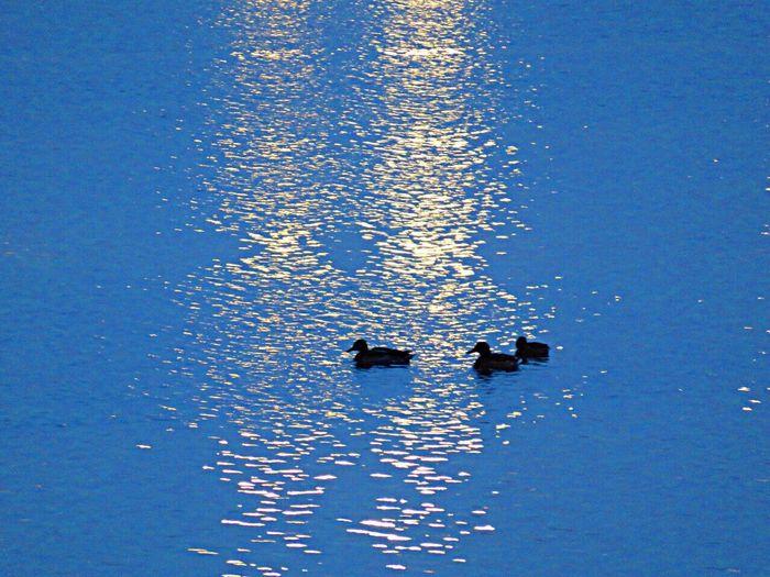Birds Bird Photography Birdwatching Birds_collection Bird EyeEm Birds Birds🐦⛅ Sea Light Lights