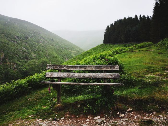 Green Mountain Hill Bench Beauty In Nature EyeEm Gallery Calm Eyemphotography Nature Relaxing Tree Tea Crop Agriculture Sky Grass Foggy The Great Outdoors - 2018 EyeEm Awards