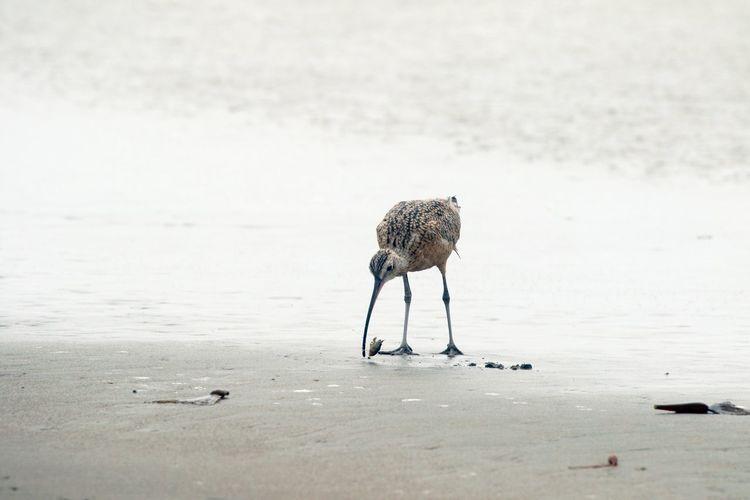 Gray heron perching at beach