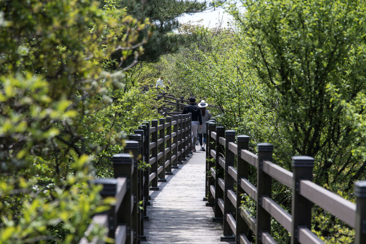 View at 1100m altitude of Hallasan Mountain in Jeju Island, South Korea 1100m Altitude Beauty In Nature Day Footbridge Green Color Hallasan Mountain JEJU ISLAND  Nature No People Outdoors Railing Tree Water Wood - Material