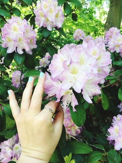 Springtime Iwantthatcamera Flower Flowering Plant Human Hand Plant Hand Freshness Beauty In Nature Fragility Vulnerability  Growth Finger Leaf