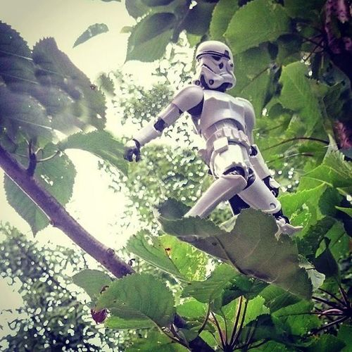 Different leafboard angle, need a higher tree and a wider angle! Normanthetrooper Toyslagram_Starwars Toyphotography Toyoutsiders @toyoutsiders Toydiscovery @toydiscovery Paraleafing Zifu_toys Tgif_toys