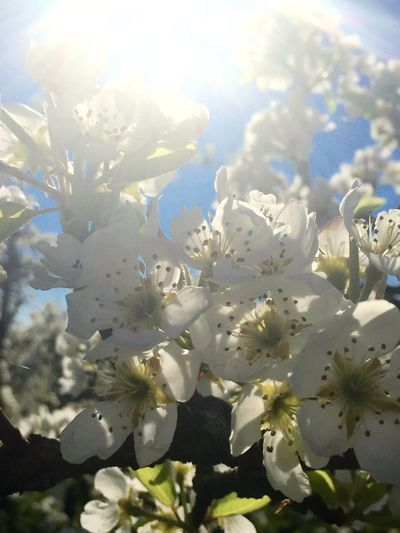 Beauty In Nature Blooming Blossom Blossoms  Colorful Day Flower Fragility Growth In Bloom Nature No People Outdoors Springtime