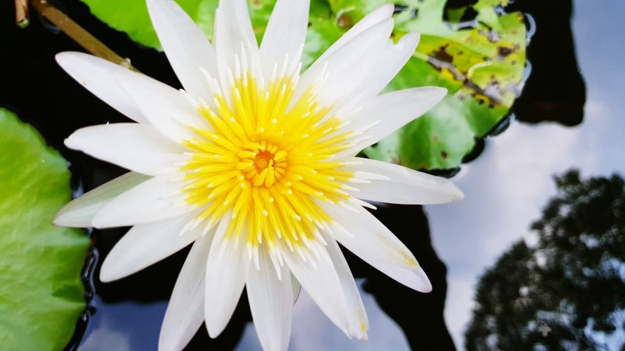 Flower Head Flower Petal Water Yellow Close-up Plant