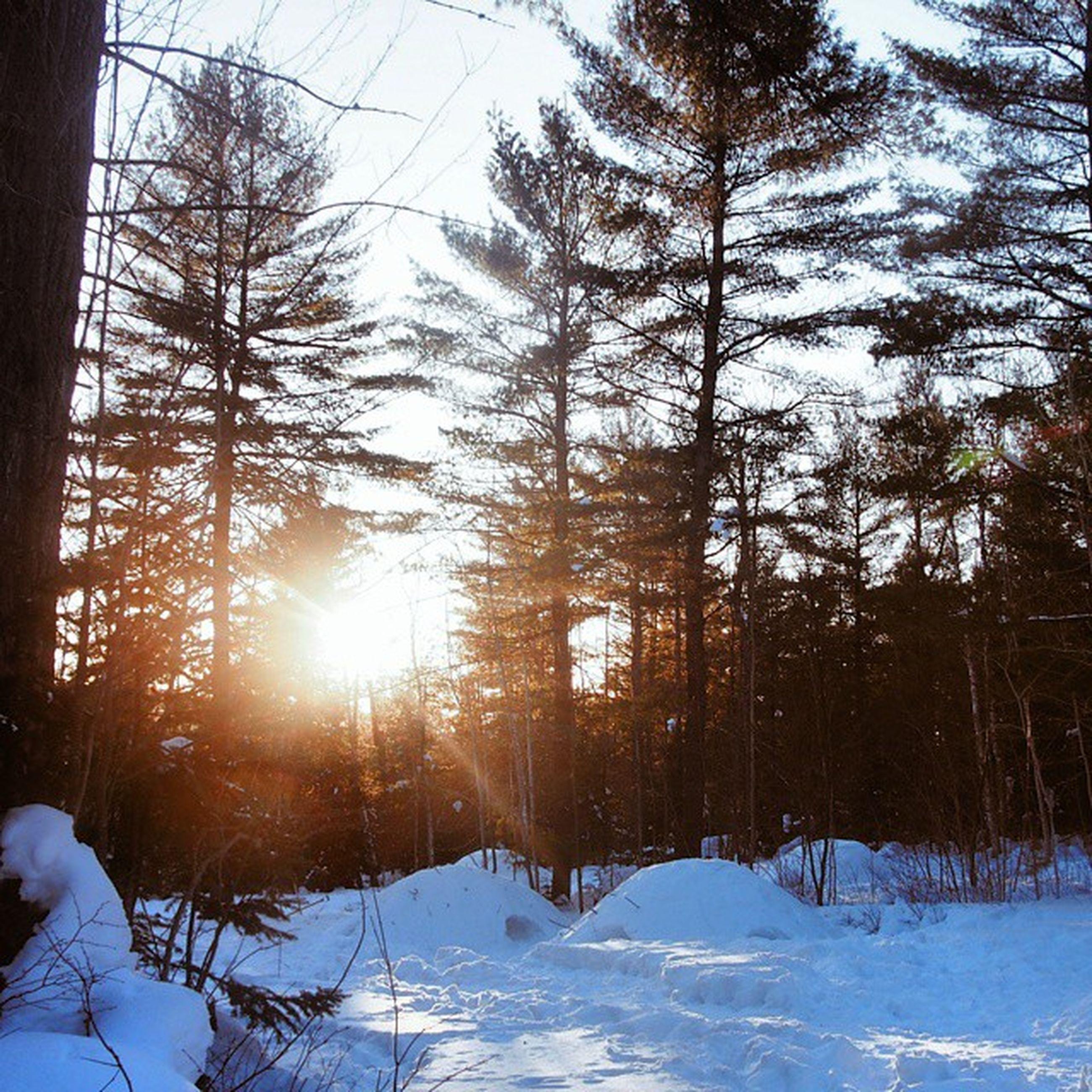 snow, winter, cold temperature, season, weather, sun, tree, covering, frozen, tranquility, nature, tranquil scene, beauty in nature, bare tree, landscape, sunlight, field, sunbeam, scenics, cold