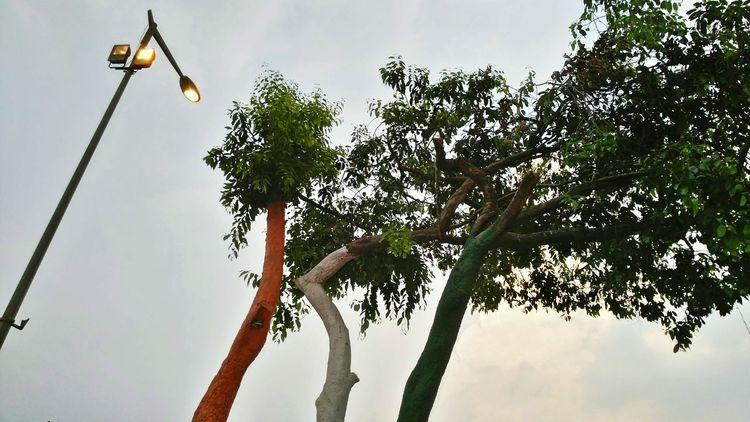 || Street Journals || Delhi, India. Tri Colour TheFoneFanatic Nature PhonePhotography Mobilephotography Nokia808 Colorful Streetphotography India Indian Flag Tree Water Sky Tree Trunk Autumn Mood