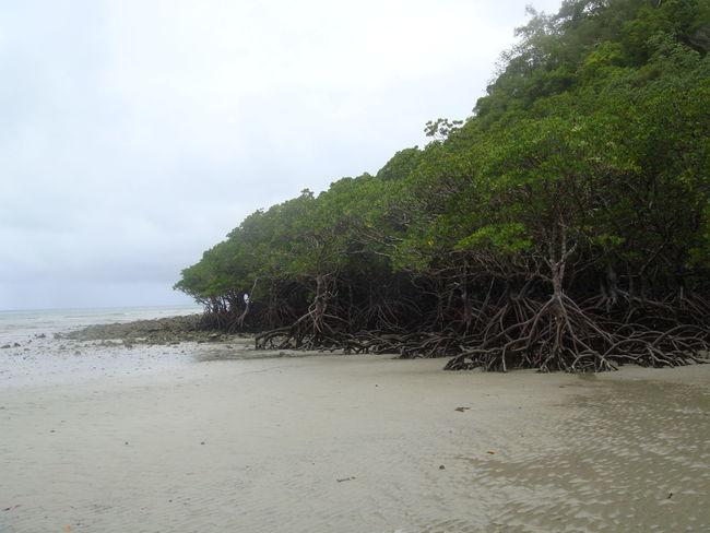Cairns, North Queensland, Australia Mangrove Rainforest Rainy Day Seashore