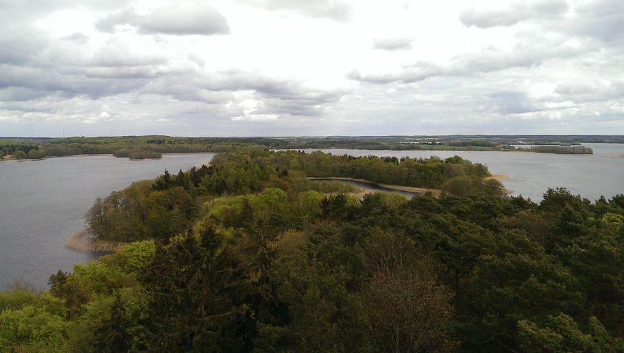 Lake view Tree